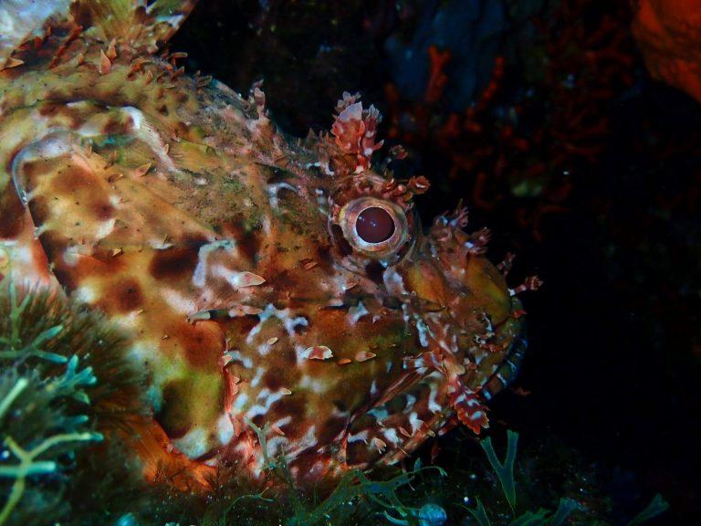 Poisson - Calypso Marine