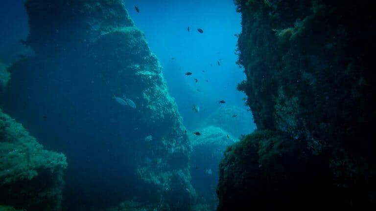 calypso marine sorties 5