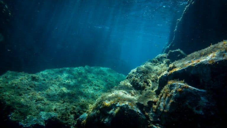 calypso marine sorties 7